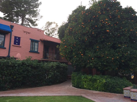 Arizona Inn : an orange tree in front of a room with a balcony
