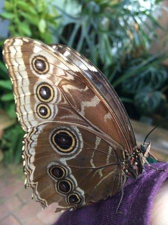 Tucson Botanical Gardens : butterfly