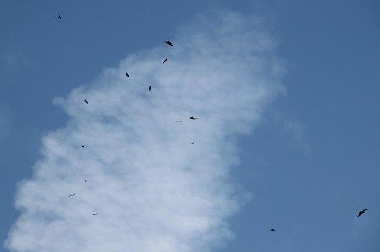 Prestige Sportfishing : more in the sky