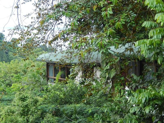 Tulemar Bungalows & Villas: Bungalows with monkeys