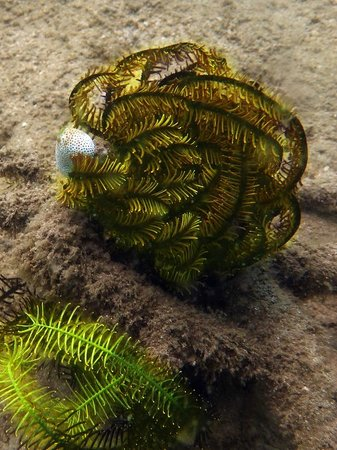 Pearl Beach Resort: Another beautiful creature - diving