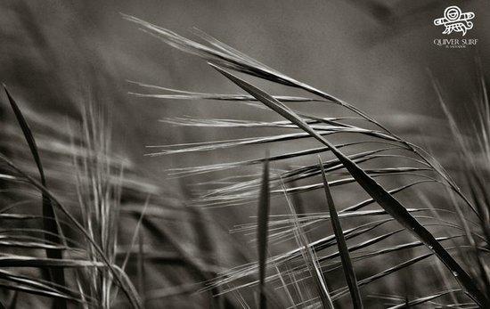 Parque Bidwell: grass