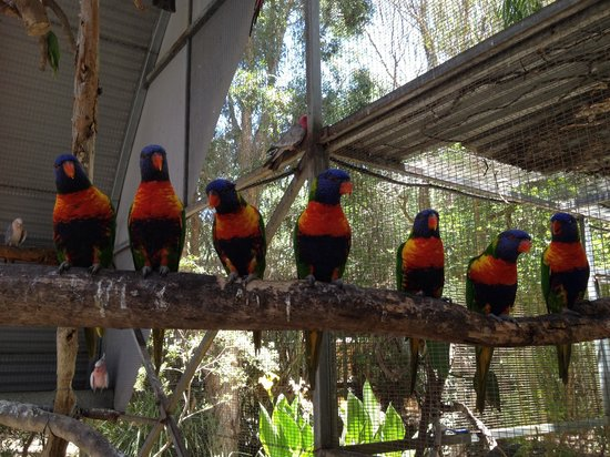 Peel Zoo: Lorikeets in interactive aviary