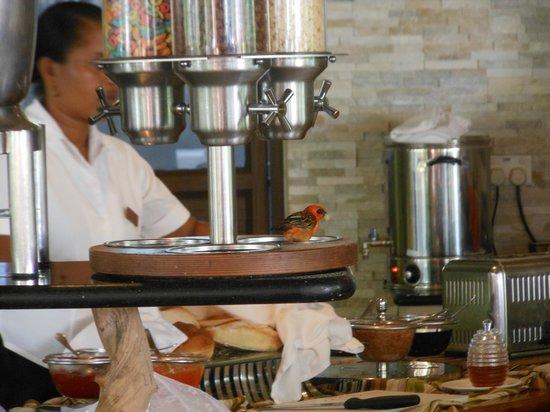 Le Duc de Praslin: colazione a buffet