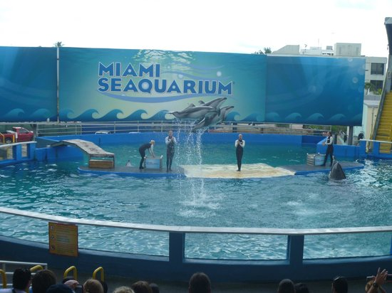 Miami Seaquarium - Picture of Miami Seaquarium, Key Biscayne ...