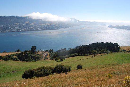 Otago Tours - Day Tours: View from Otago Peninsula