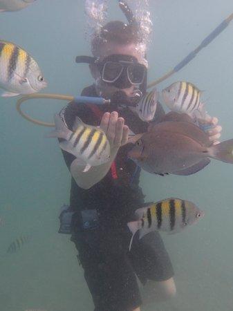 Aqua Adventure : feeding 1