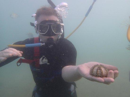 Aqua Adventure : spiky