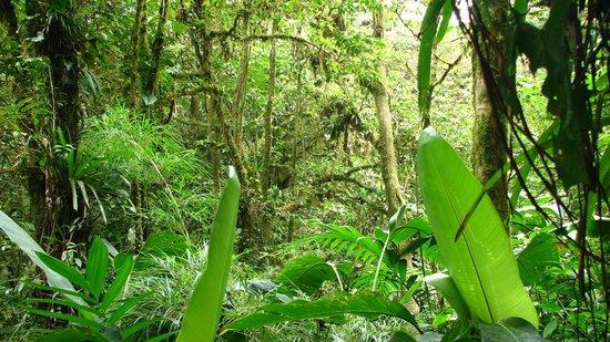Monteverde Cloud Forest Biological Reserve: Monteverde Reserve Cloud forest