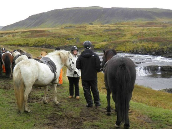 Laxnes Horse Farm : Photo Ops
