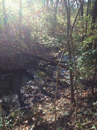 Raven Run Nature Sanctuary : River
