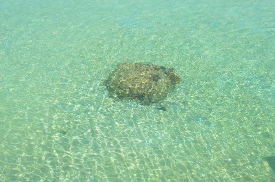 Vivanta by Taj Coral Reef Maldives: Lagoon, coral reef