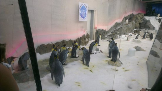 SEA LIFE Melbourne Aquarium: Penguins