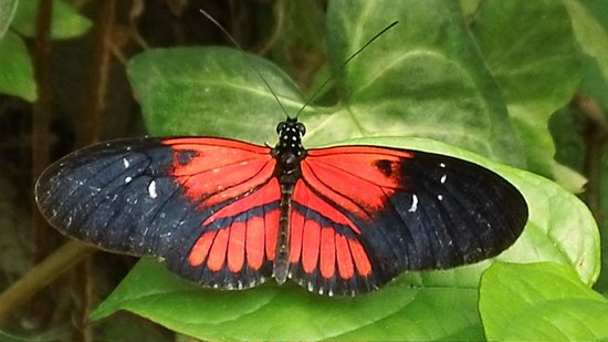 Nathaly Butterfly Garden: Mindo