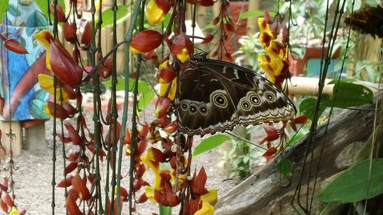 Nathaly Butterfly Garden : Mindo