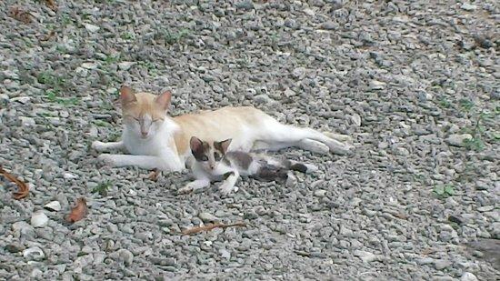 Pele Island: Contented Pele felines, mother and kitten