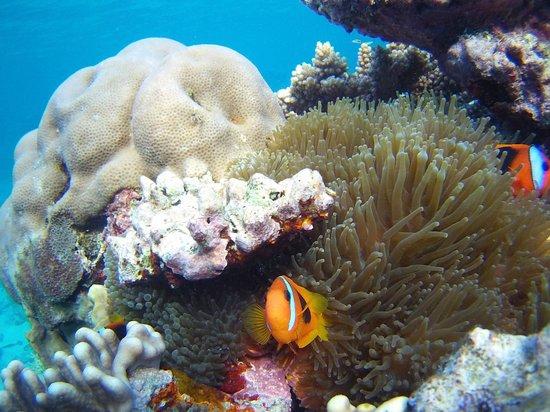 The Espiritu: Coral near Champagne Bay
