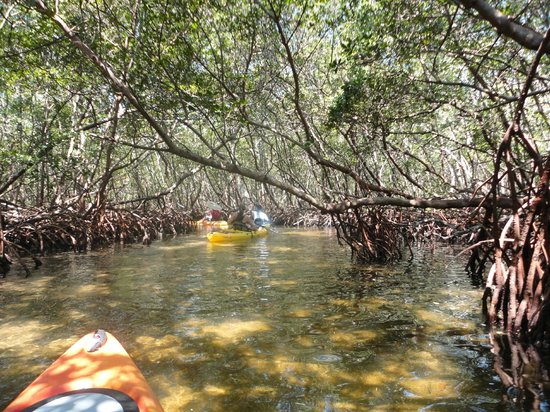 Sea Life Kayak Adventures: Mangrove tunnels