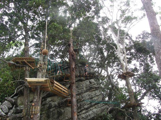 Shoalhaven Zoo : Part of one of the courses at Tree Adventure