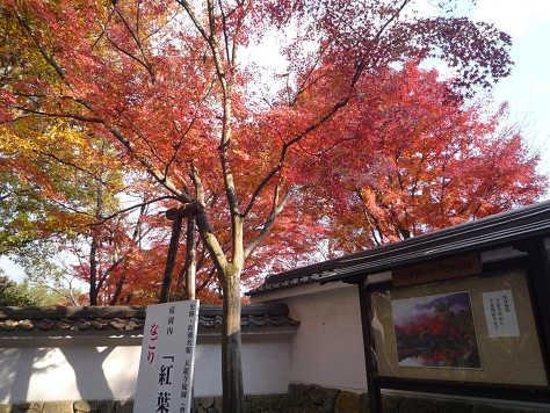 Tenryuji Temple: なごり紅葉
