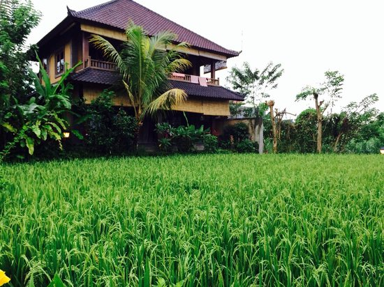 Bliss Spa and Bungalow: Rice pady field in front of room