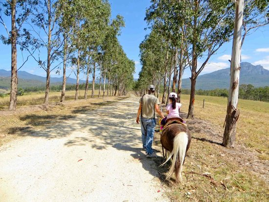 Lillydale Farmstay: Pony riding