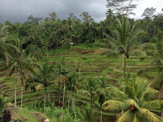 Tegalalang Rice Terrace : Beautiful scenery