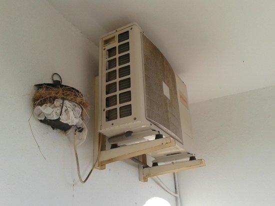 Hotel Simon: Les oiseaux dans la clim!