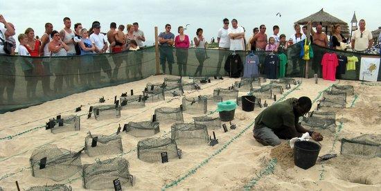 VOI Vila do Farol : Sos turtle