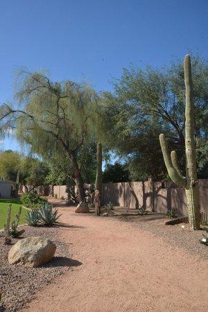 Scottsdale Camelback Resort: Walking Path