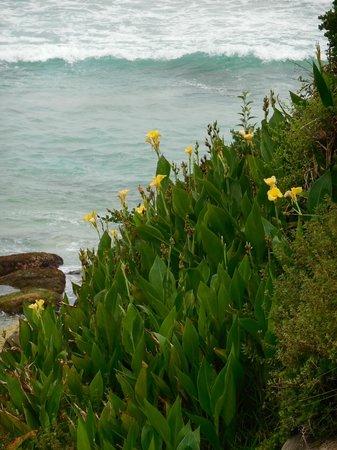 Bondi to Coogee Beach Coastal Walk: one of the plant colonies on the walk