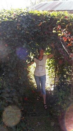 """Establo San Rafael B&B: LOS """"ORBES"""" O Cmpos de energía en el secret garden de pasonaria"""