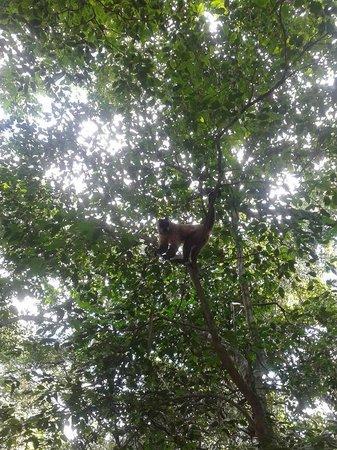 Araras Pantanal Ecolodge: Em uma das trilhas
