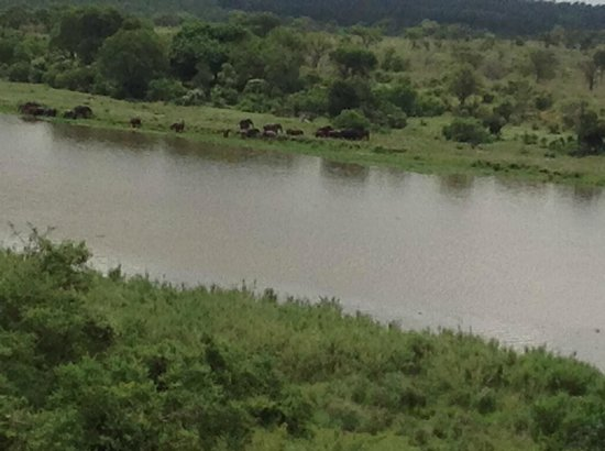 Buhala Lodge: View from terrace of Elephants at Crocodile River