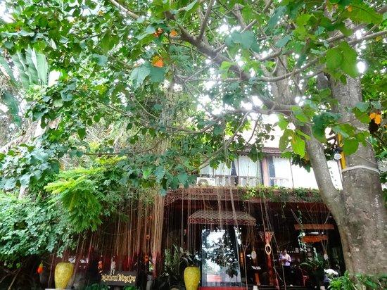Natural Wing Health Spa & Resort: Green!