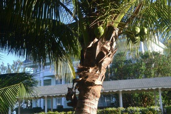 Grand Palladium Lady Hamilton Resort & Spa: From Patio