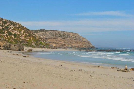 Southern Ocean Lodge: Beach - seals excursion