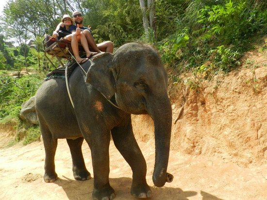KokChang Safari Elephant Trekking: 1