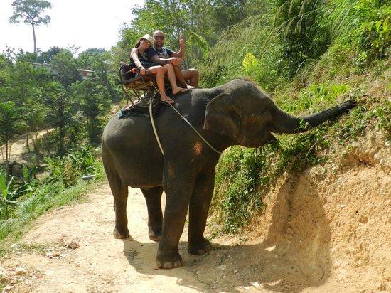 KokChang Safari Elephant Trekking: 3
