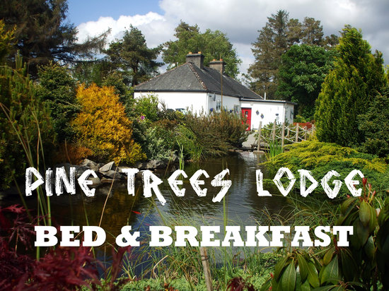 Pine Trees Lodge: Pine Trees Bed & Breakfast