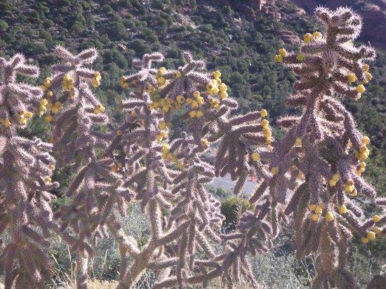 Sedona Red Rock Tours : Beautiful Cactus