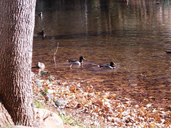 Sedona Red Rock Tours: Ducks on the creek