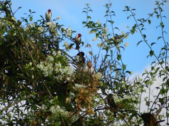Pousada Raio de Sol: Olha os pássaros a alegrar nossas manhas e final de tarde