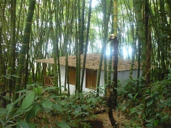 Bosques Del Saman - Alcala: cabaña entre el guadual