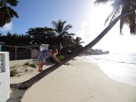 Blue Orchids Beach Hotel: Hotel Beach
