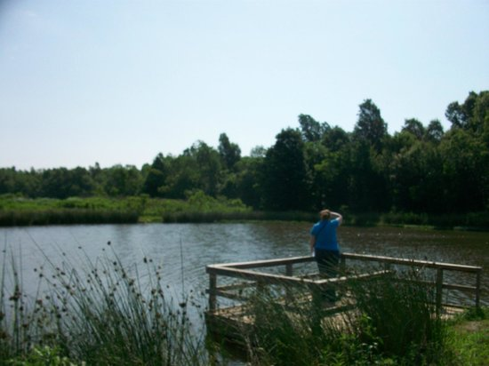 Mary K. Oxley Nature Center: Viewing the Mashland