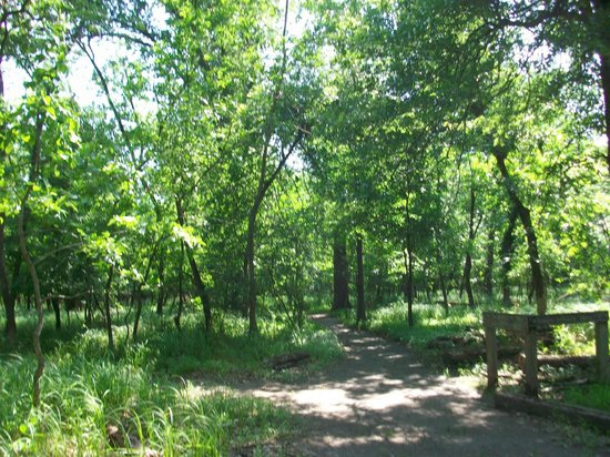Mary K. Oxley Nature Center: Wooded area