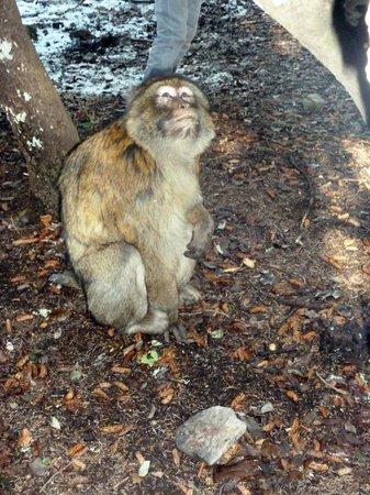 Riad Dar Dmana: Les Magots (singe)