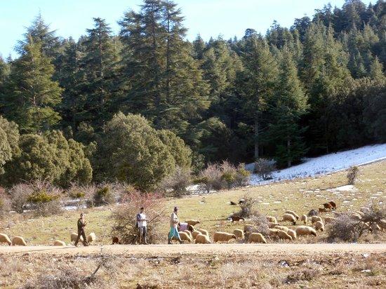 Riad Dar Dmana: La Forêt de Cedres