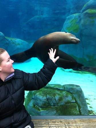 St. Louis Zoo: the under water seal tunnel is our fave